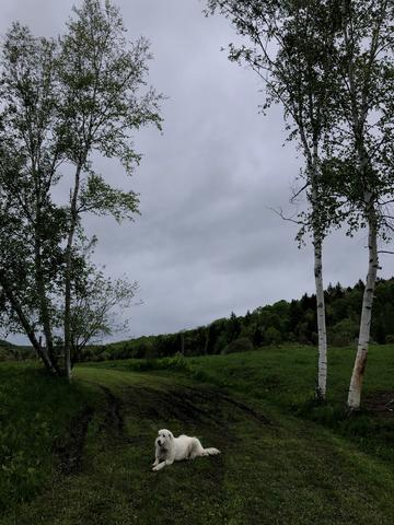 Dog Meadow Image